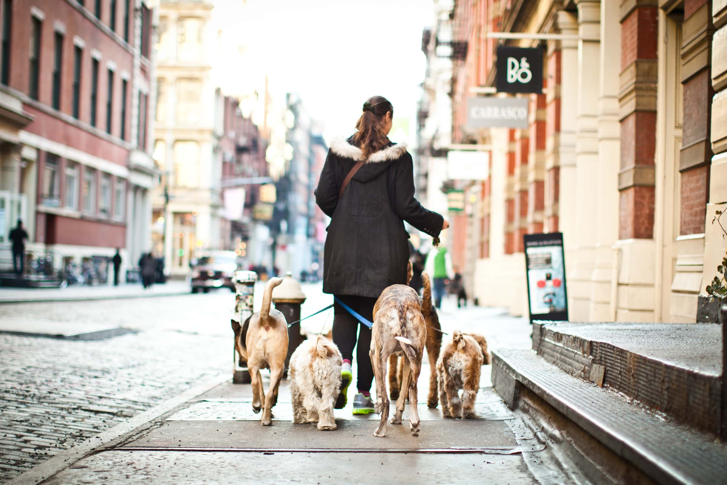 Dog Walker Manhattan City Urban